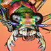 Tiger Beetle by Johan J.Ingles-Le Nobel