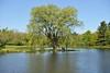 Holden Pond