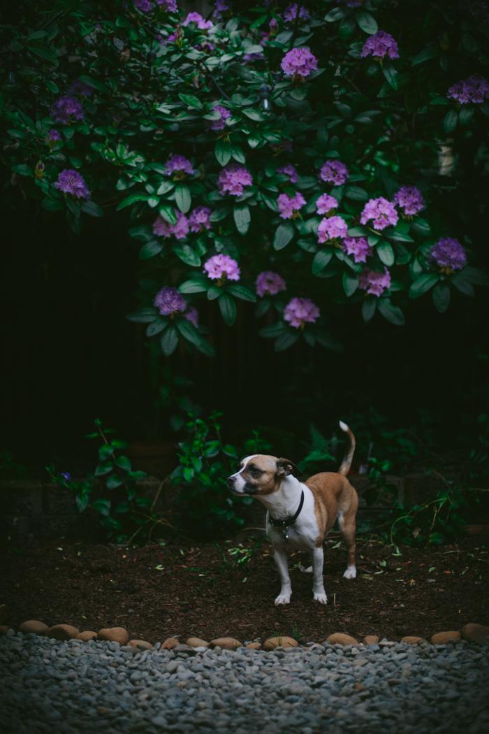 Spring Garden by Eva Kosmas Flores | Adventures in Cooking