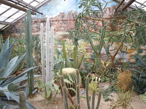 Cacti at The Rockefeller Park Greenhouse in Cleveland, Ohio