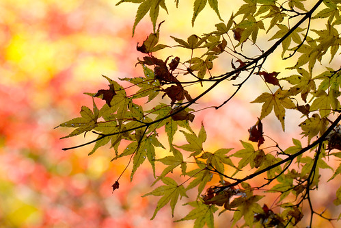 Autumn Leaves6