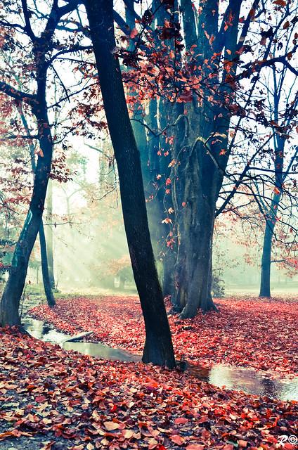 The red carpet  ...  [EXPLORE]