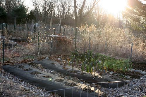 winter gardens 063