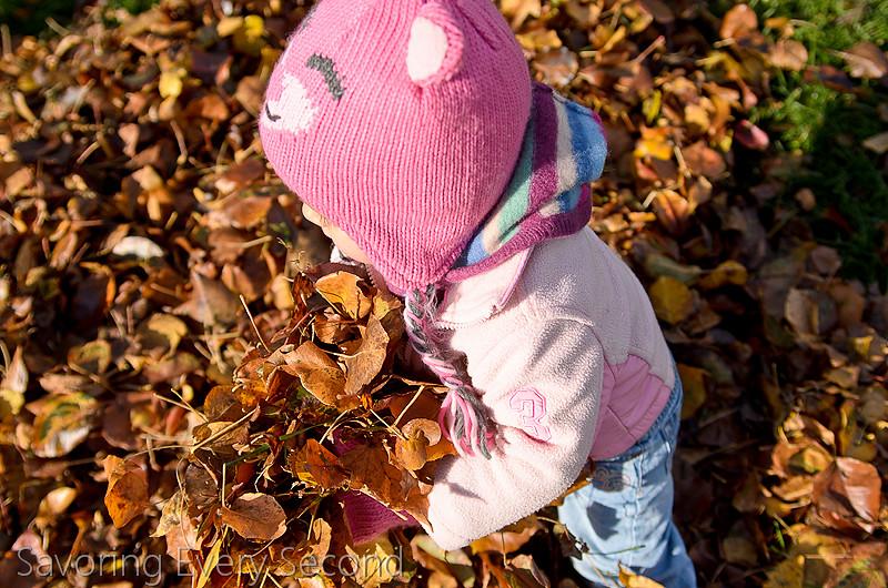 Fall Leaves4-Edit.jpg