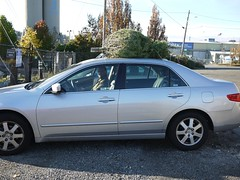 Driving off with our tree