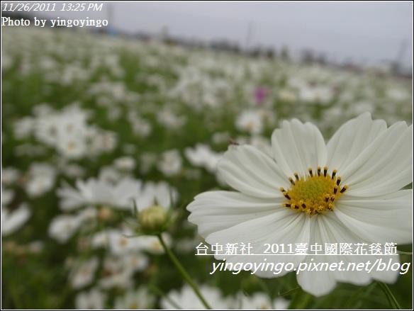 2011臺中國際花毯節20111126_R0044159