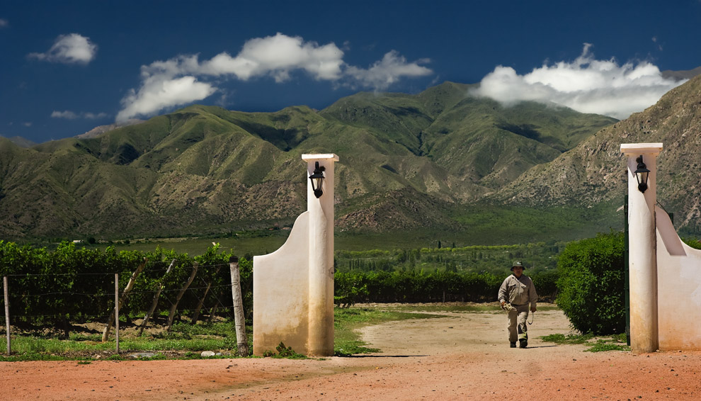 Lugar de madure de la cepa del vino Varietal Torrontes, un vino blanco que se distingue por su intenso aroma y sabor frutado. La ruta del vino, Cafayate. (Guillermo Morales)