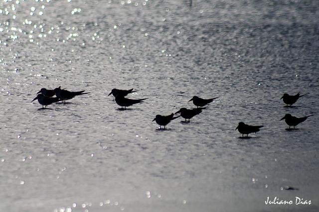 Lagoa do Peixe 2011
