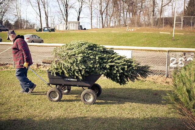 Christmas tree 2011-6