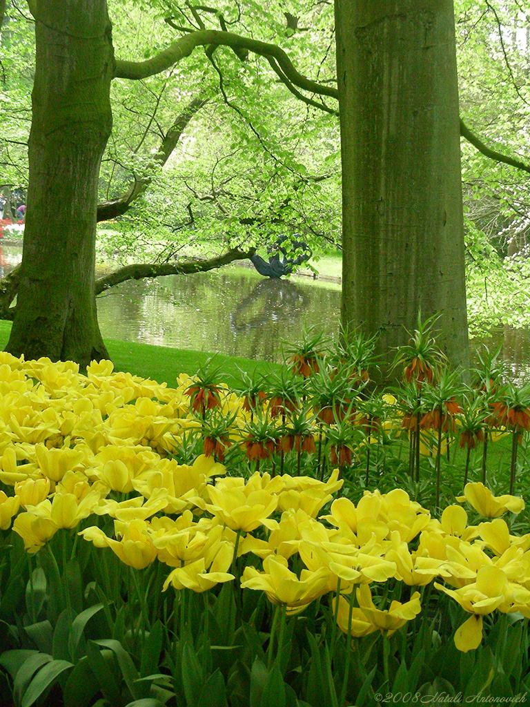 キューケンホフ公園に咲く花々と木々