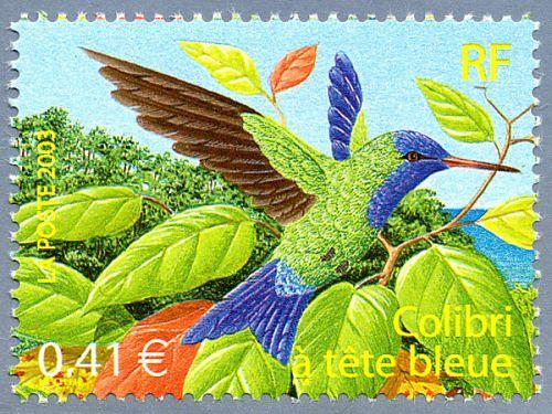 Colibri à tête bleu