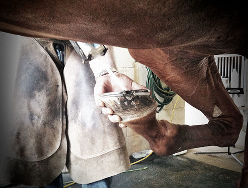 Farrier with hoof