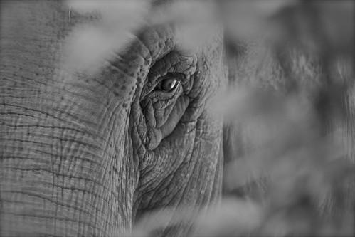 Bioparco di Roma - Zoo