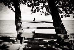 Black Bird & Coconut