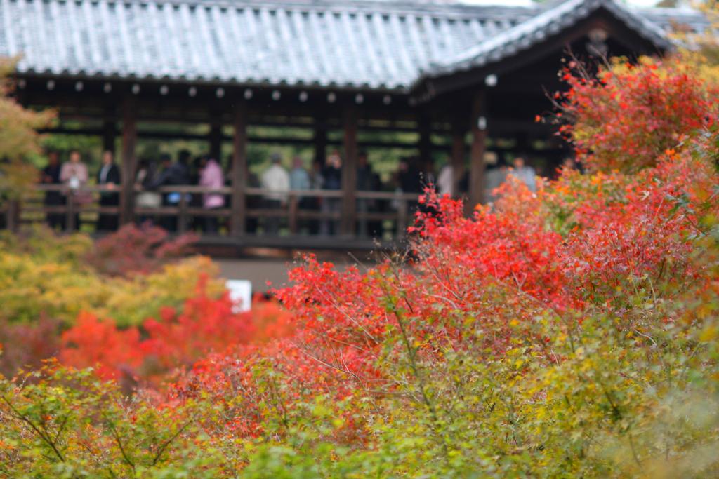 Kyoto Rakunan Guide (2)