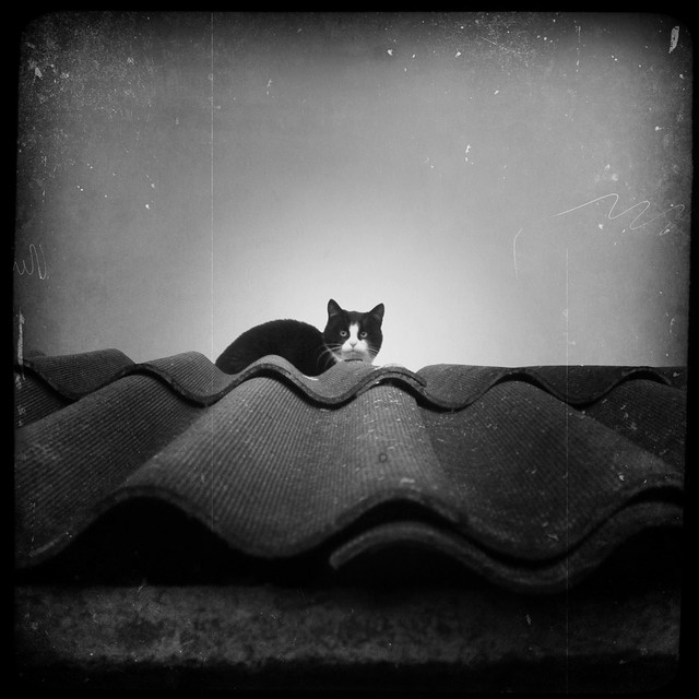 Textured Cat on a Textured Roof
