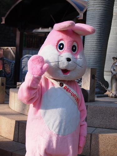 多摩動物公園 新年のご挨拶着ぐるみ ウサギ