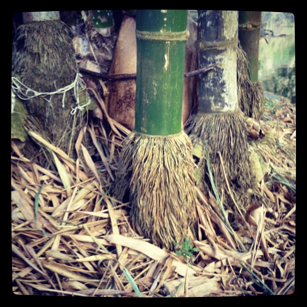 Pie de Bambú