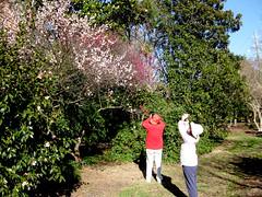 Raleigh Arboretum
