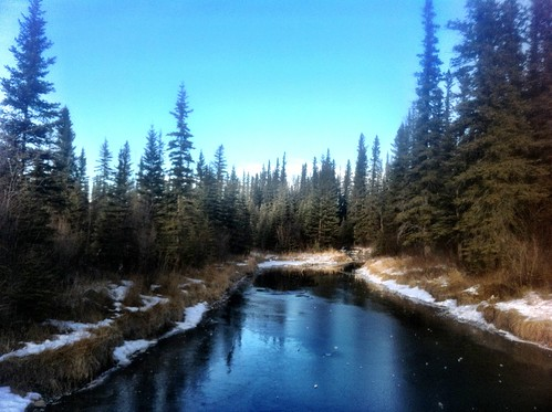 Calgary Kid Friendly Hikes: Griffith Woods