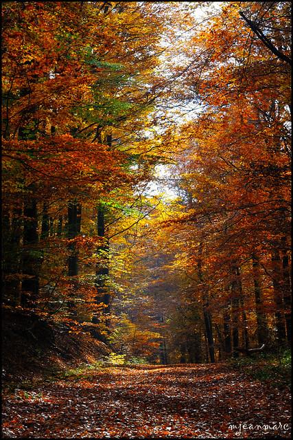 Retour sur l'automne