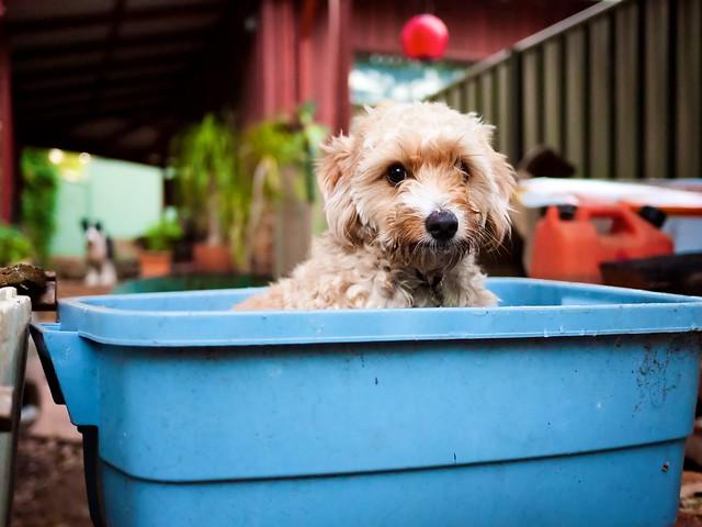 Full Bucket Dog Food