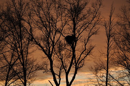 Eagle and Nest at Sunset