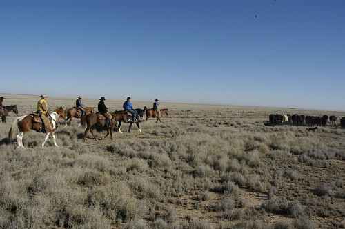 cattle drive new mexico dude ranches