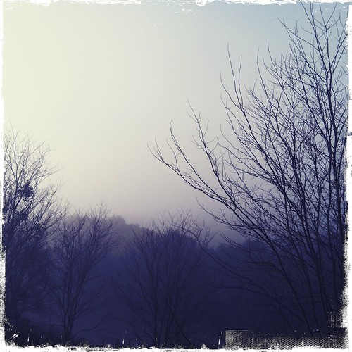 the view outside my studio on a foggy morning