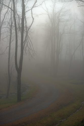 road trees mist building fog rural landscape nebel scenic northcarolina