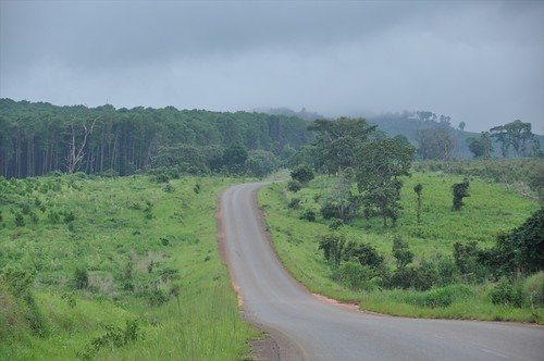 Through Viphya forest
