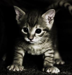 Gratuitous Kitten