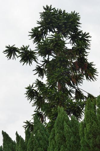 Tree/plants