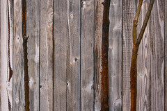 plank, wall, wood, wood stain, trunk, lumber, hardwood,