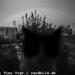 The Twentieth Spring - Shushi/Karabakh