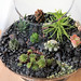 succulent terrarium by Greenery NYC