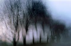 THE SECRET LIVES OF TREES
