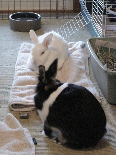 Bunny friends.