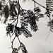 Um dia uma folha me bateu nos cílios. Achei Deus de uma grande delicadeza. by Renata Soraya