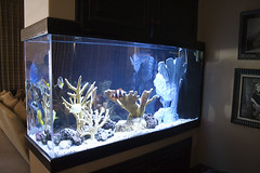 fish-tank-aquarium-custom-installed-bradenton-sarasota-florida-8