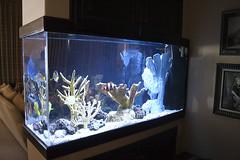 fish-tank-aquarium-custom-installed-bradenton-sarasota-florida-8