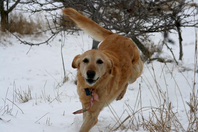Tia on the run