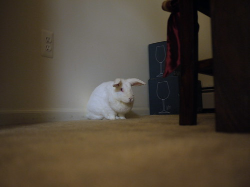 gus lurking in the dining room at night