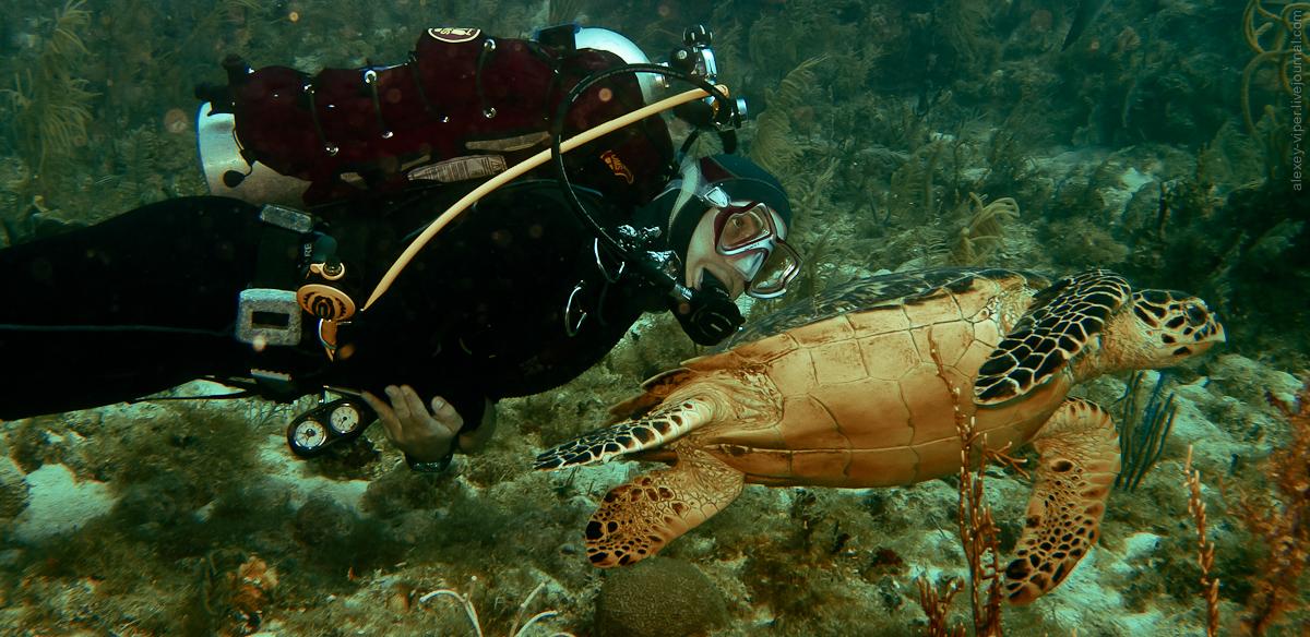 2012.01.12-2012.01.26_dive_safari_[cuba]-diving-004