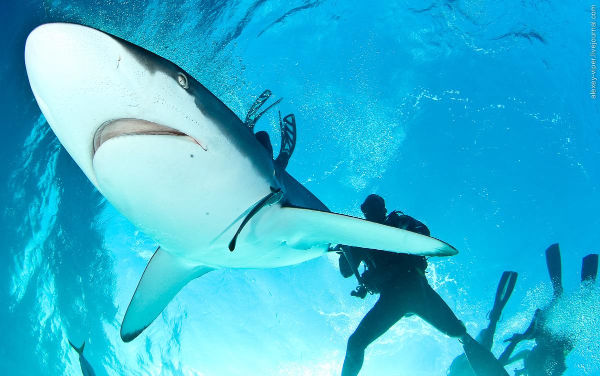 2012.01.12-2012.01.26_dive_safari_[cuba]-diving-008