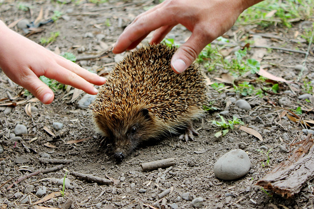 Petting the hedgehog