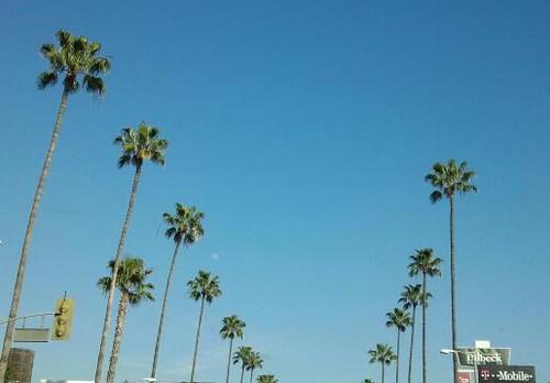 Ventura Boulevard by Jodi K.