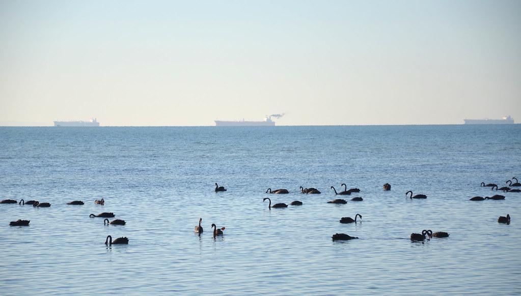 Black Swan 03