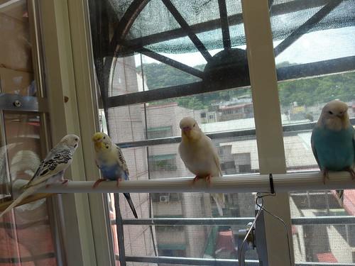 鳥寶寶們在一起