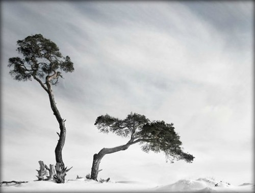 Winter Wonderland by Plaithy -Mostly OFF-